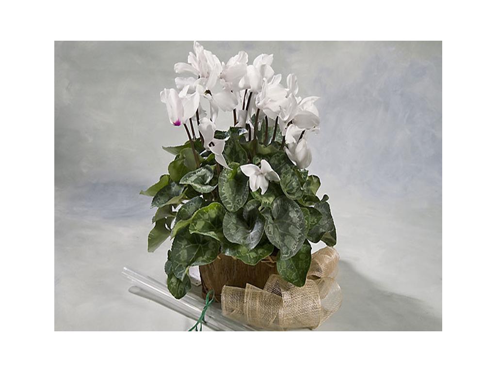 Flor temporada flores y plantas for Plantas temporada
