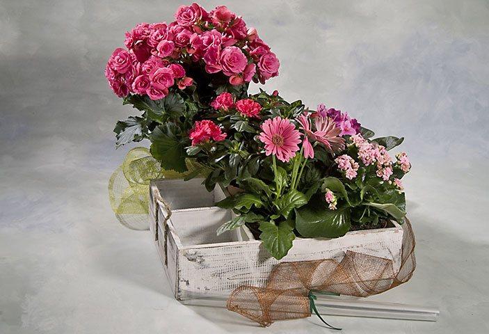 Flores y plantas para regalar. Comprar centros de flores y plantas para regalar en una ocasión especial.
