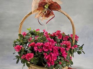 Plantas en Flor