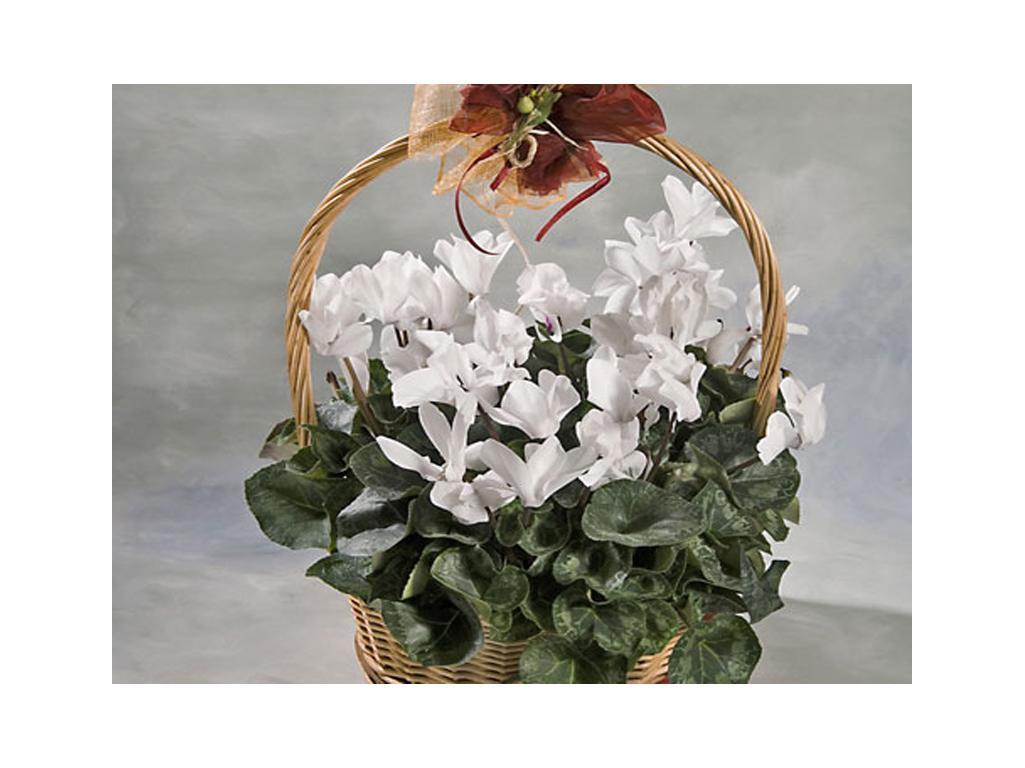 Flor temporada grande flores y plantas for Plantas temporada