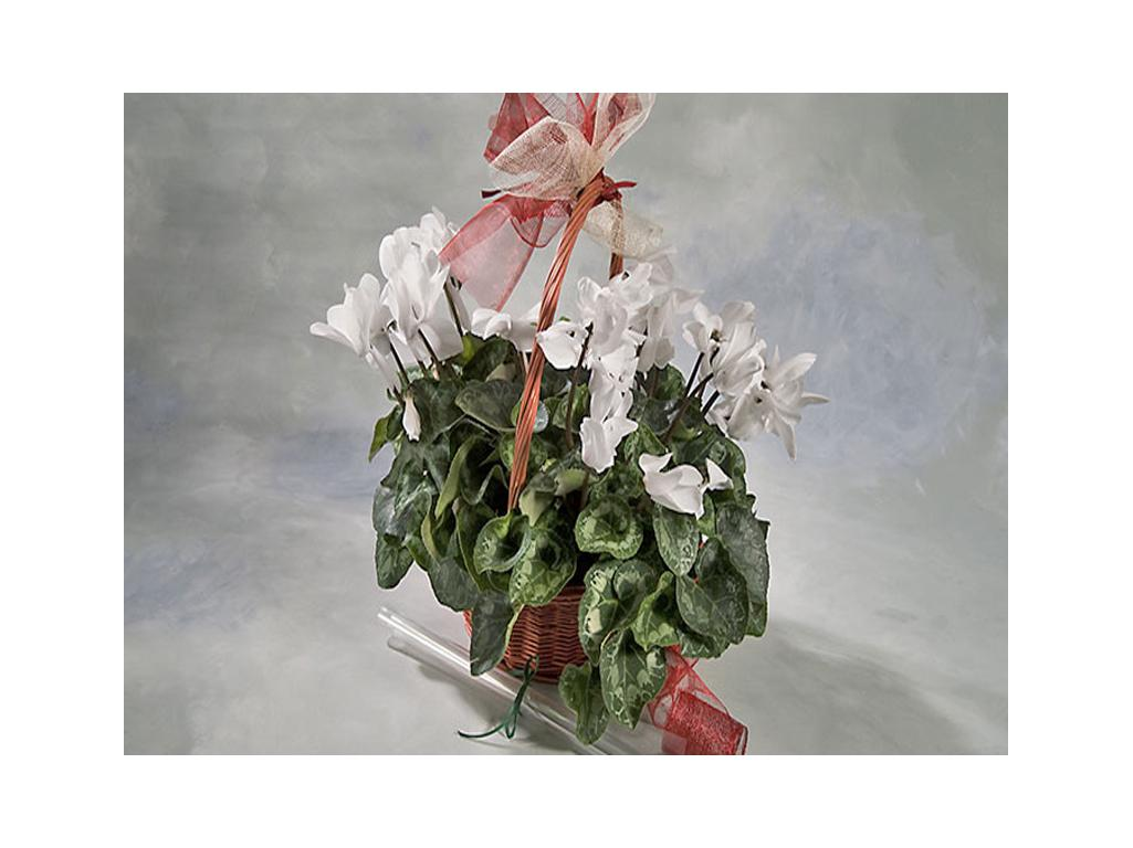 Flor temporada media flores y plantas for Plantas temporada